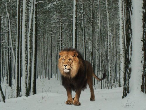 Расселение львов в лесах Сибири
