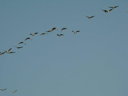 Посмотрели на гусей