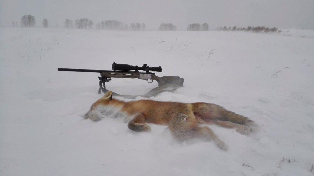 охота с манком