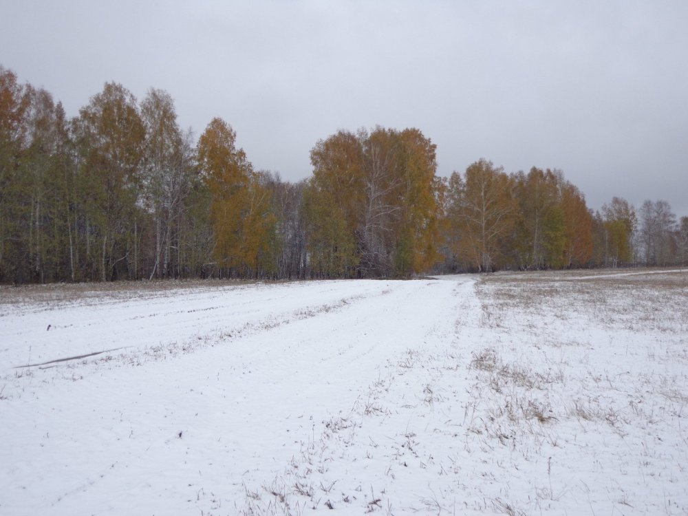Снежку подсыпало.