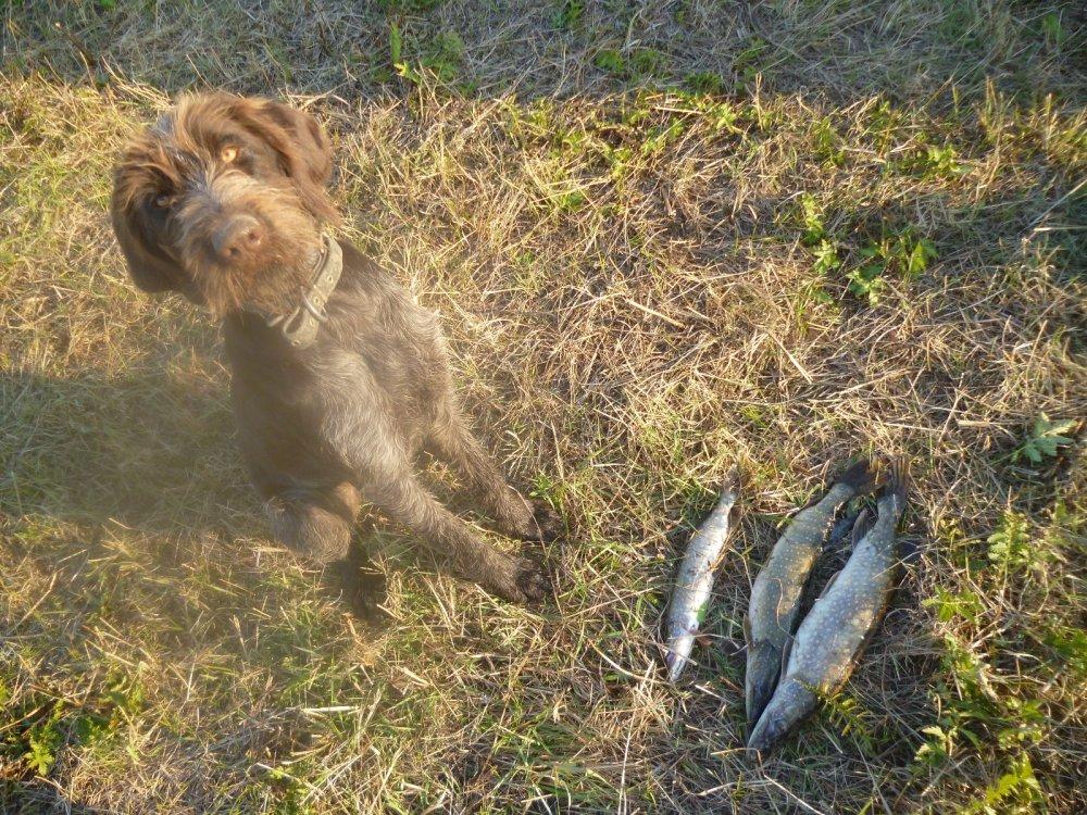 Крайний улов в этом году на блесну