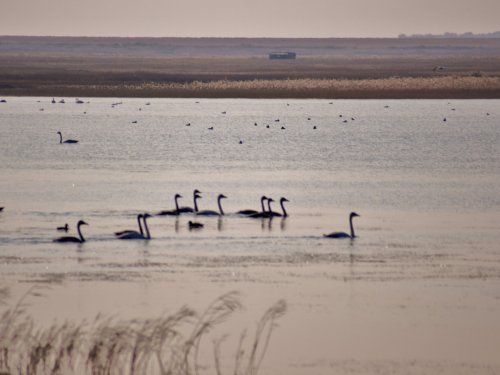 Лебединное озеро.