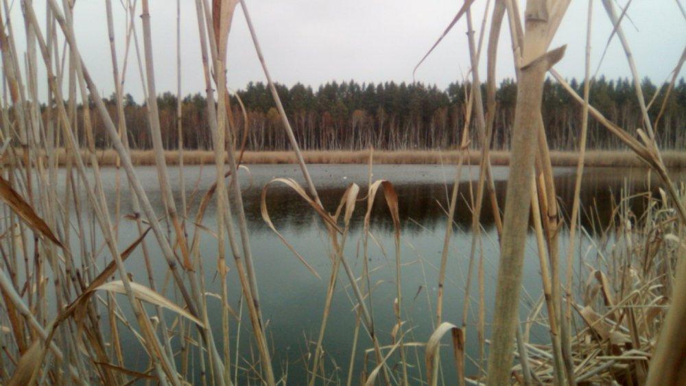 На болоте.