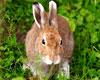 Справочник современного охотника: охота на зайцев