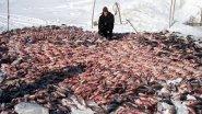 Рыбалка по крупному! Суровая таежная реальность.