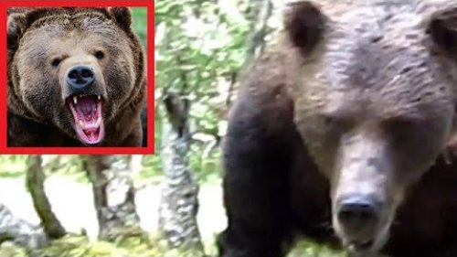Мужик отразил атаку медведя в Сибири