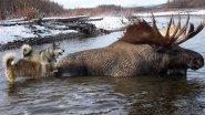 Охота на Лося в Западной Сибири
