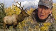 Охота на изюбря на реву и загоном в Якутии