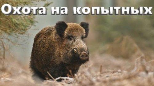 Охота в предгорьях Кавказа