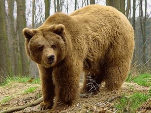 Медвежий аэродром