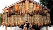 Будни эвенкийских охотников! Промысловая жизнь в тайге.