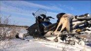 Охота на волков - 2016 (Казахстан)