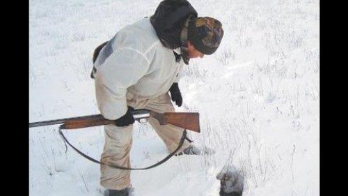Охота на кроликов с хорьками