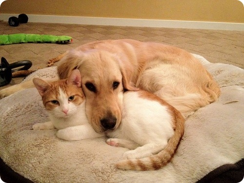 Неправильно содержишь кошек и собак? Получи штраф!