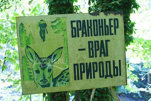 МВД России всерьез задумалось о браконьерах и наносимом ими ущербе