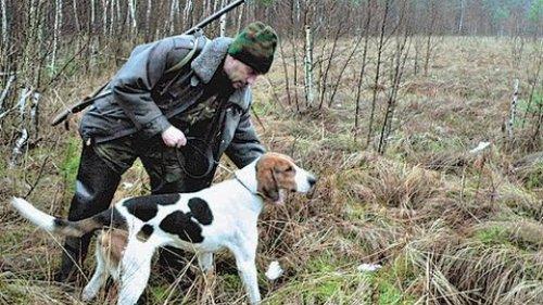Натаска гончих собак! Опытные охотники. Из цикла |Охотничьи истории|