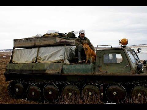 Сибирская охота на Лося с Лайками.
