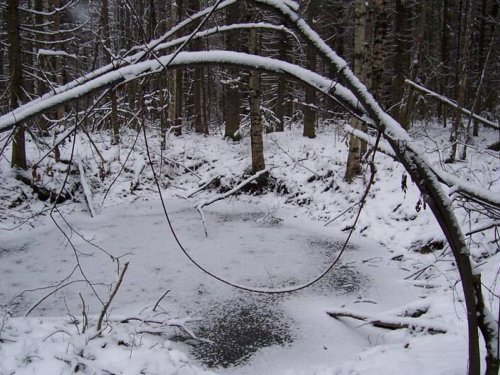 В конце года Министерство природных ресурсов и экологии РФ примет окончательное решение по петельной ловле