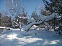 Как минимум это Дракон под снегом!