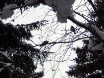 Лесные птицы зимой.