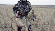Охота на волка в диких местах! Волк - зверь опасный!