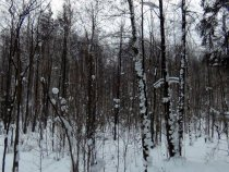 Болото, накрытое снегом
