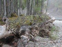 Сибирский крокодил)))