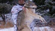 Охота на Волка. Шакалы тайги!