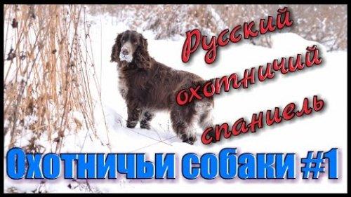 Русский охотничий спаниель. Охота на утку, рябчика и зайца