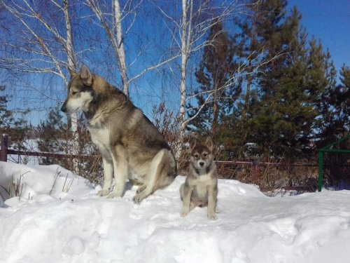 Отец и сын...
