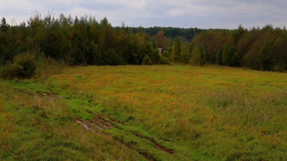 Новгородская область, Окуловский район. Сентябрь 2016, овёс.