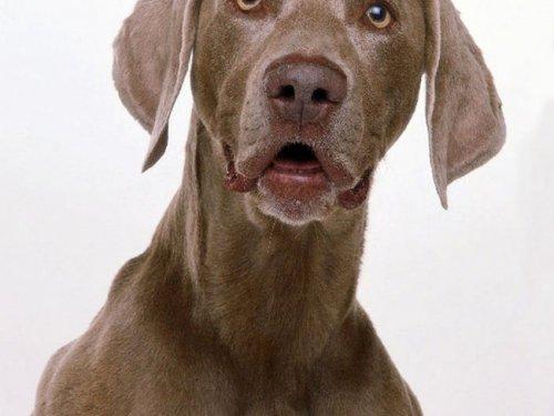 Новосибирские охотники спасли дрейфующую на льдине собаку