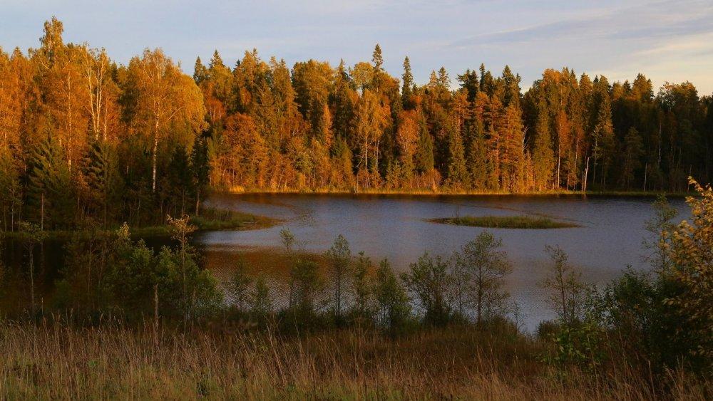 Новгородская область, Окуловский район, озеро Поддубское.