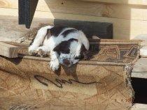 На солнышке и поспать в кайф!