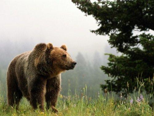 В заповеднике Красноярского края проснулись медведи