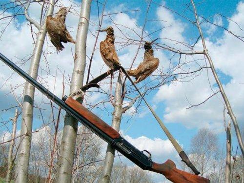 В НСО разрешена охота на вальдшнепа