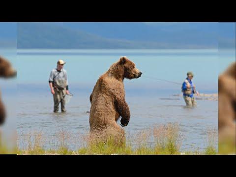 ТОП-10 встреч с дикими животными на рыбалке