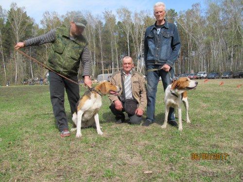 Наши потомки от Тайны и Забавки ! 45 Новосибирска обл.выставка собак охотничьей породы.