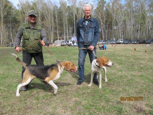 ДОБЫЧКА и ПЛАКСА 45 Новосибирска обл.выставка собак охотничьей породы.
