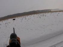 В загоне, зима 2016 года