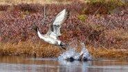Видео охота на утку
