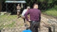 Охота на Орловщине  Отчет о выставке  Часть 3  Испытания норных собак