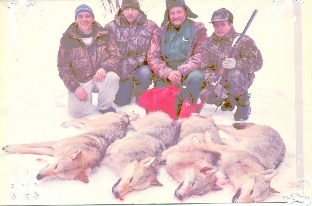 Сегодняшние волчатники