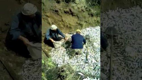 Камшат-уничтожает безнаказанно рыбу