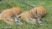 Охота на косулю в Беларуси. Из цикла