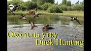 Охота на утку - Duck Hunting