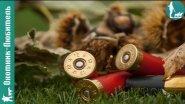 Сколько патронов нужно для проверки боя ружья?