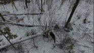 Охота с лайкой на лося. Съемки с квадрокоптера