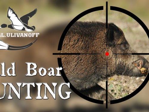 Охота на кабана лучшие выстрелы