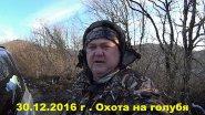 Охота на дикого лесного голубя вяхерь витютень с собакой лабрадор ритривер 30 12 2016 г.